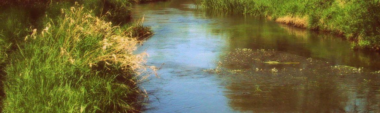 fjederholt_2002-05-024